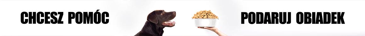 Labradory obiadki